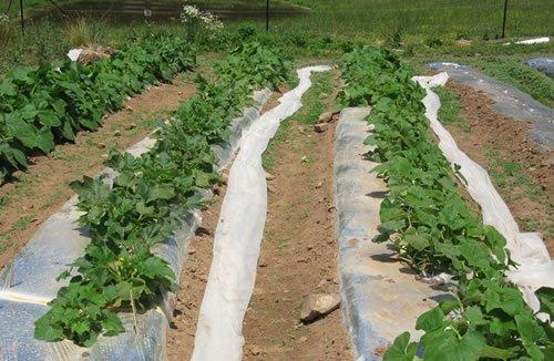 Геотекстиль для сельского хозяйства