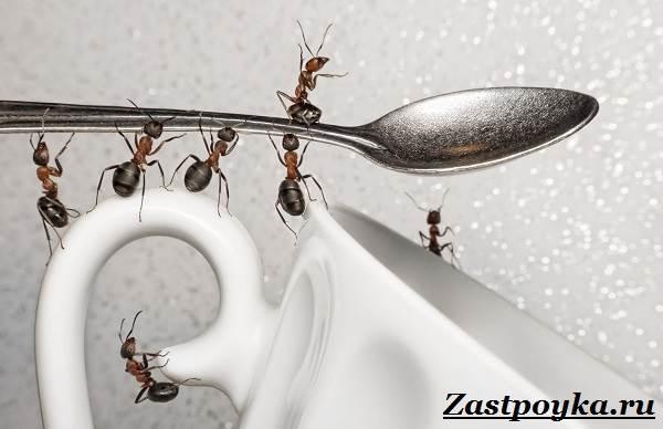 Как-избавиться-от-муравьев-дома-1