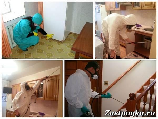 Как-избавиться-от-муравьев-дома-9