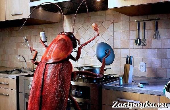 Как-избавиться-от-тараканов-дома-1