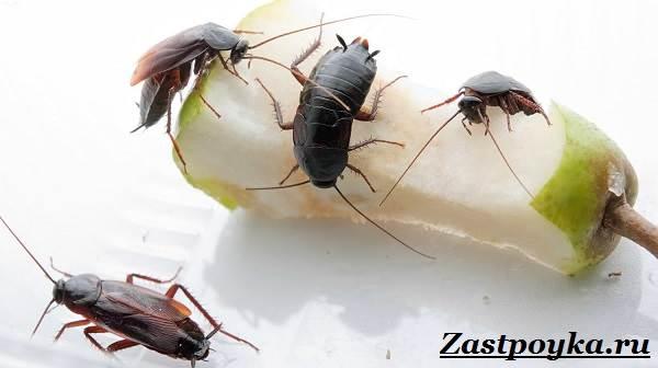 Как-избавиться-от-тараканов-дома-4