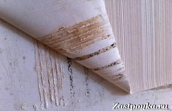 Плесень-в-квартире-Причины-появления-и-как-избавиться-от-плесени-на-стенах-7