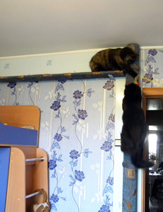 Уход за кошками. Содержание кошек.